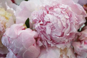 Des fleurs à Caen pendant le confinement